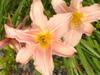 Flowersblossum