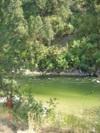 Greenishsalmon2